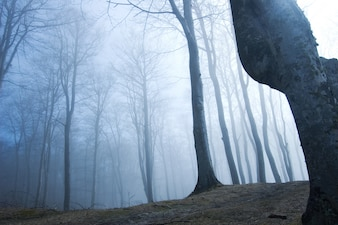 Bosque con niebla visto desde abajo