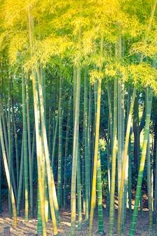 Bosque de bambú (imagen filtrada procesada efecto de la vendimia.)