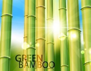 Bosque de bambú paquete de vectores de fondo