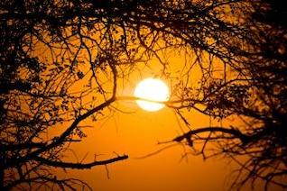 bosque de elaboración del amanecer