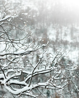 Bosque de la caída natural de hielo negro