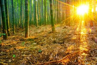 Bosque lluvioso crecimiento al aire libre vitalidad japonés