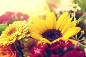 Botánica celebración color pétalo regalo