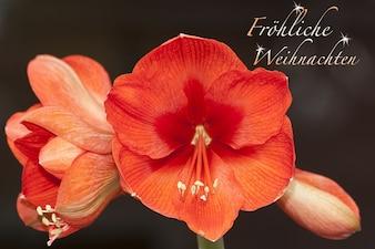 Botánica doldiger planta de amarilis flor polen