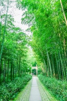 Brillante Japón sereno jardín frescura