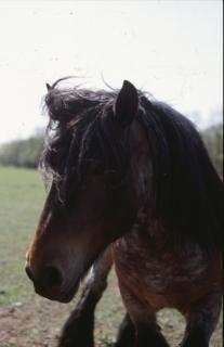 caballos caballo pony agrícola
