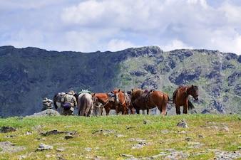 Caballos ensillados en las montañas