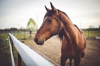 Cabeza de caballo de cerca