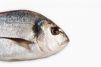 Cabeza de pescado de cerca