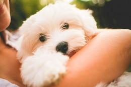 Cachorro Sosteniendo