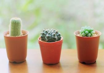 Cactus pequeño para decorado con efecto de filtro retro