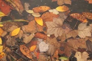 Caen las hojas, de color naranja, rojo