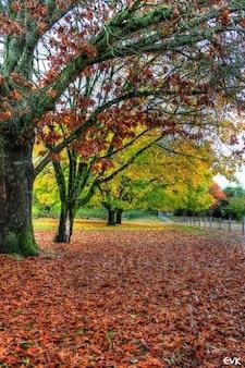 Caen las hojas del otoño árboles naturaleza
