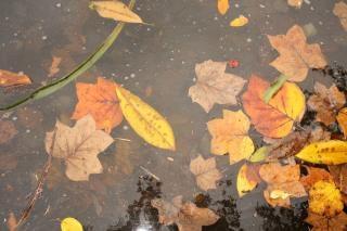 Caen las hojas, las hojas