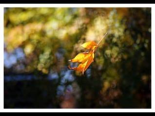 Caída de las hojas temporada