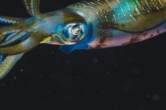 Calamar grande y colorido con un fondo negro