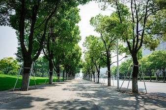 Calle con árboles