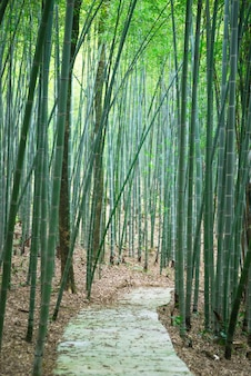 Camino a través de un bosque de bambú