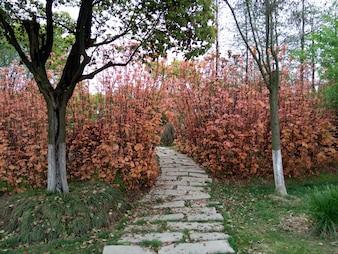 Sendero en el bosque descargar fotos gratis for Caminos de piedra en el jardin