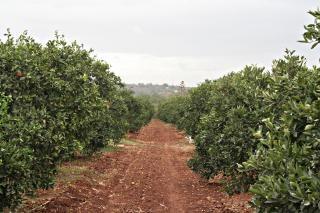 camino de tierra en un campo