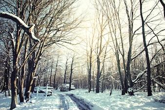 Camino y árboles cubiertos de nieve