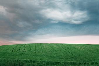 Campo de agricultura verde
