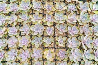 Campo de cactus pequeño hermoso.