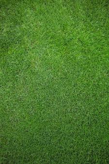 Campo de hierba verde de fondo