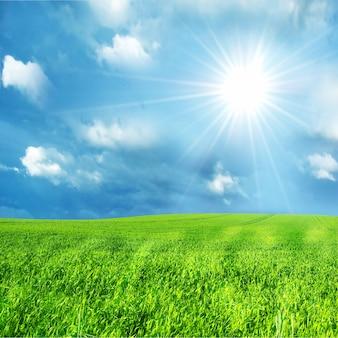 Campo verde con un día soleado
