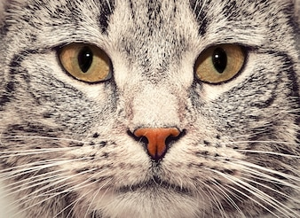 Cara de gato de cerca