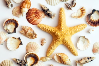 Caracolas y estrella de mar