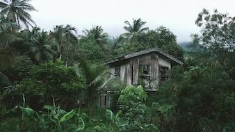 Casa de madera en la selva