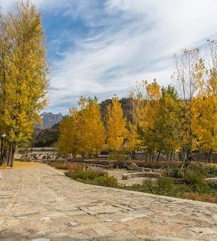 Casas de ladrillo en el noroeste de China, edificios antiguos para los turistas a ver, otoño, hojas de oro