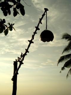 cáscara de coco lámpara