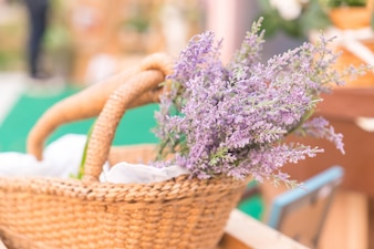 Caspia para flores de relleno