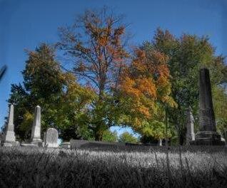 cementerio de árboles