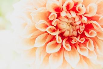 Cerca de la flor macro