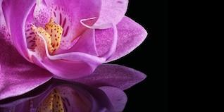 Cerrar espejo espejo orquídea planta macro