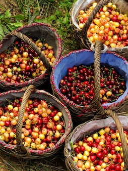 Cestas llenas de fruta