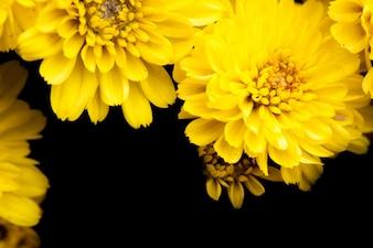 Cierre de macro flor