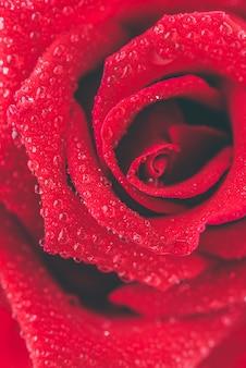 Cierre de rosa roja