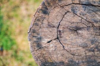 Cierre para arriba del árbol Stump.