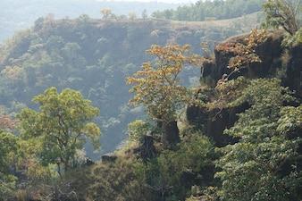 Cima de una montaña con árboles