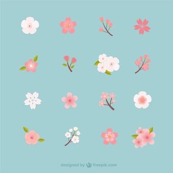 Colección de flores del cerezo