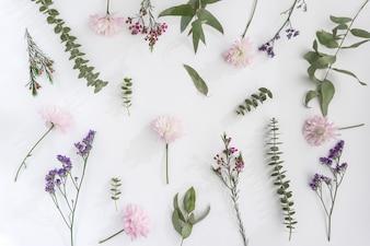 Coleccion de flores geniales sobre superficie blanca