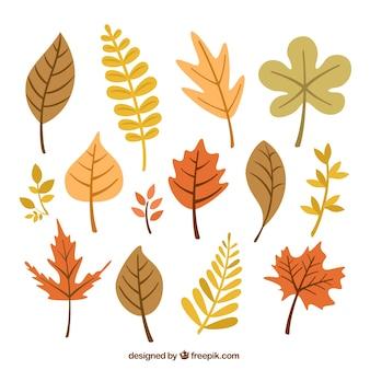Colección de hojas otoñales