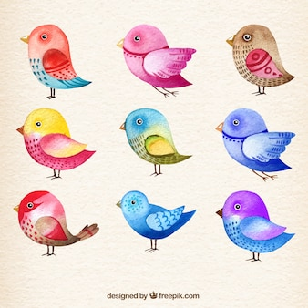 Colección de pájaros de acuarela