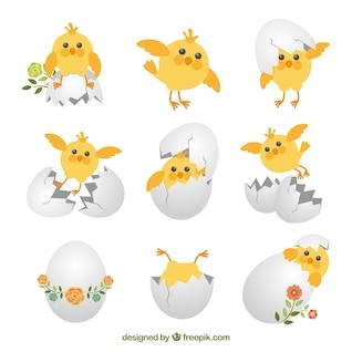 Colección de pollitos lindos