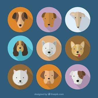 Colección de razas de perros