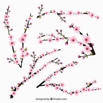 Colección ramas florecientes